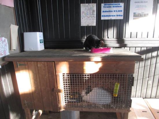 Solway Holiday Village: Rabbits at the Farm