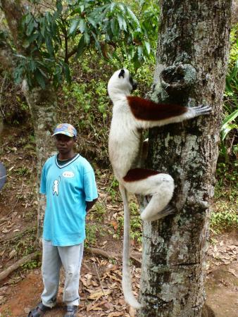 Madagascar Exotic: Exotic Animal Park