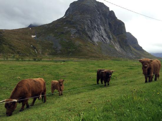 Flakstad Municipality, Noruega: Campos en Flakstad