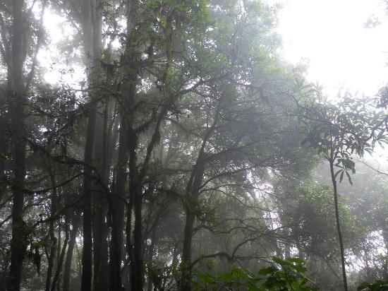 Huitepec Ecological Reserve: Nebelwald