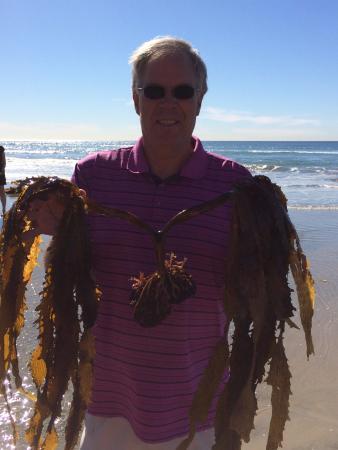 Solana Beach, Californië: Full kelp, fun for the science teacher