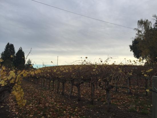 Philo, Καλιφόρνια: Hush Vineyards at dusk