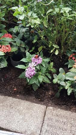 Audubon Insectarium Picture Of Audubon Butterfly Garden