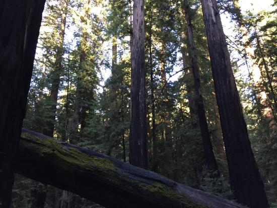 Comptche, CA: Redwood Groves