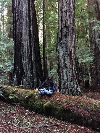 Comptche, CA: Meditating in the redwoods