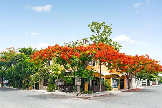 Maison Tulum: Masón Tulum flamboyant