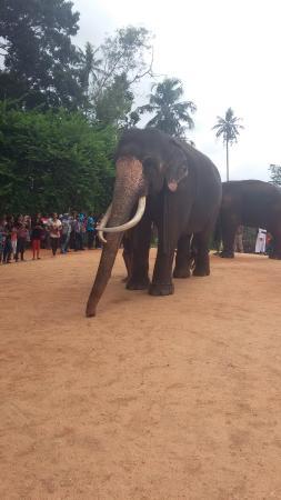 Bentota, Sri Lanka: Tours of srilanka