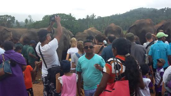 Day Tour Sri Lanka 이미지