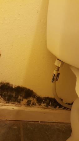 Econo Lodge Rawlins: Serious black mold issue that is not being addressed!!!!