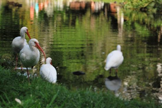 Bird Picture Of Sarasota Jungle Gardens Sarasota Tripadvisor