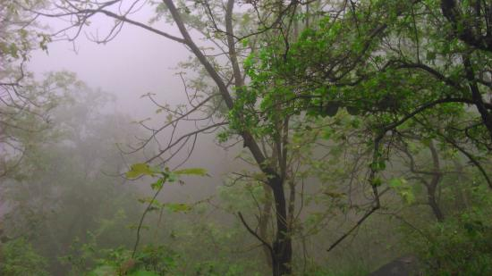 Tamil Nadu, India: On the way inside the jungle
