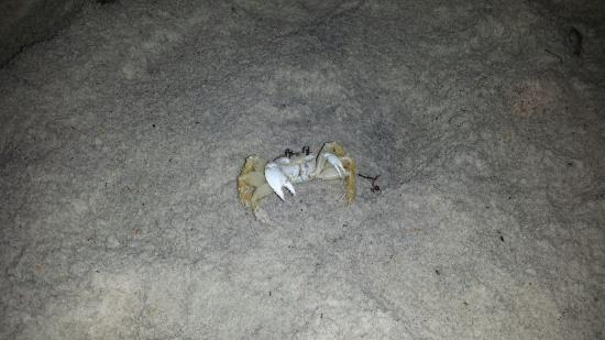 Guy Harvey Resort On St Augustine Beach Love The Sand Crabs