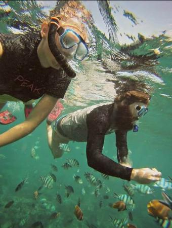 Stunning Bali Tours: snorkeling feed the colourful fish
