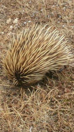 Hanson Bay, Australien: IMG-20151125-WA0001_large.jpg