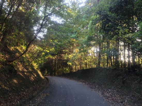Fukuoka Prefecture, Japan: 公園内の車道