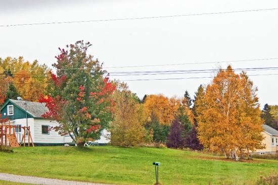 Oli's Trolley - Acadia National Park Tour: Fall colors at Bah Hahbah