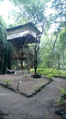 Safari Land Farm & Guest House: IMG_20151122_105152861_large.jpg