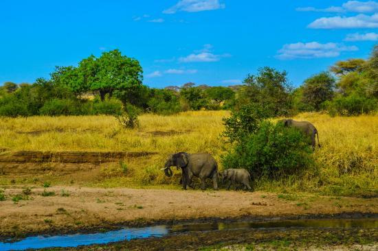 Serengeti Serena Safari Lodge: 11