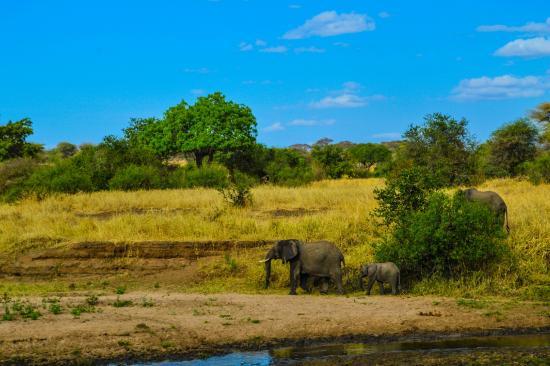 Serengeti Serena Safari Lodge: 6