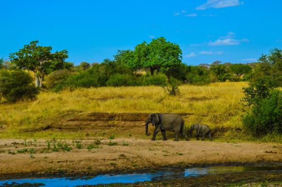 Serengeti Serena Safari Lodge: 3