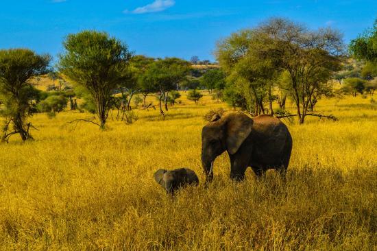 Serengeti Serena Safari Lodge: 2