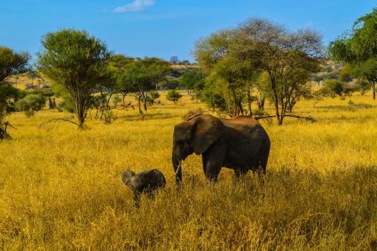Serengeti Serena Safari Lodge: 4