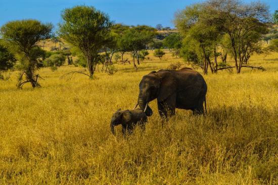 Serengeti Serena Safari Lodge: 5