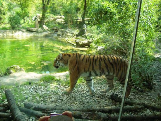 parco natura viva verona video tour - photo#36
