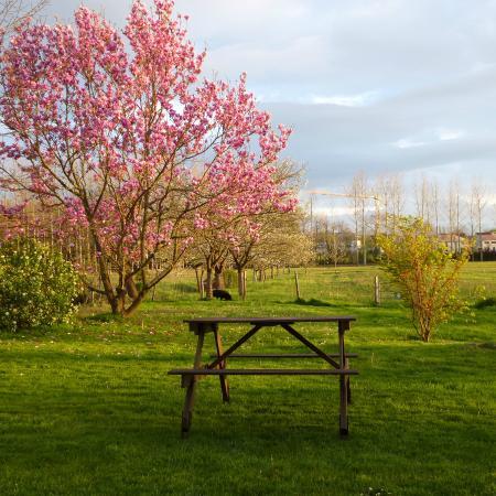 Les gites du hameau de Pau: jardin