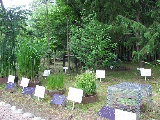 koi pond - Picture of Manyo Botanical Garden, Nara - TripAdvisor