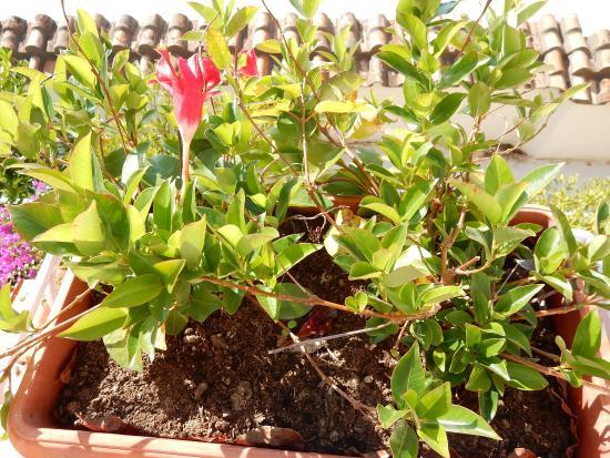 i fiori nei vasi sul terrazzo della stanza - Picture of Hotel Ancora ...
