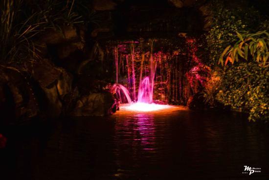 BEST WESTERN Seacliff Inn: Waterfall Pool at Night