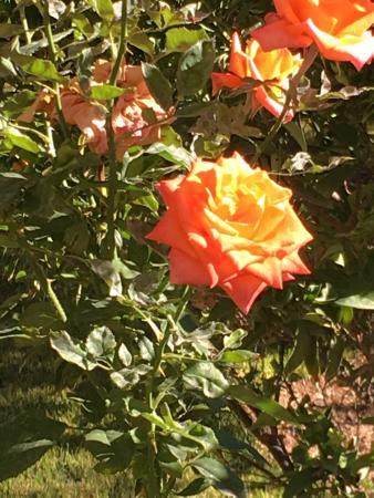 Riad Sougtani : jardins