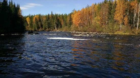 Pickle Lake, Canadá: Fall at Birch Bark Lodge
