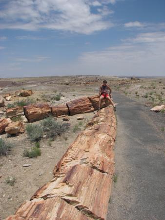 Long Logs Loop : Lo-o-o-ng log
