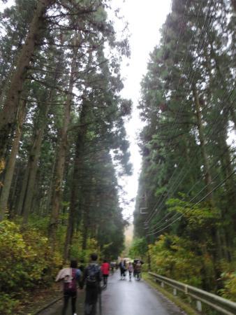 Takahagi, Japan: 杉林