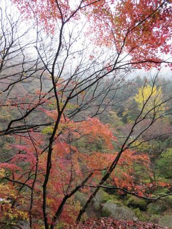Takahagi, Japan: 紅葉