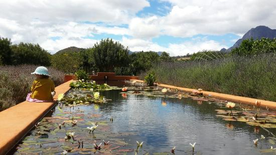 Cabo Occidental, Sudáfrica: Beautiful Babylonstoren