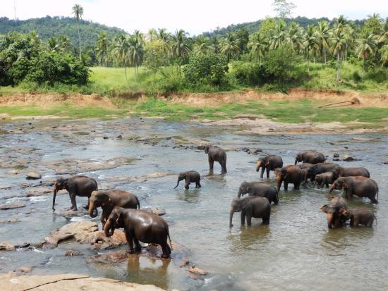 Bentota, Sri Lanka: Pinnawela Oktober 2015