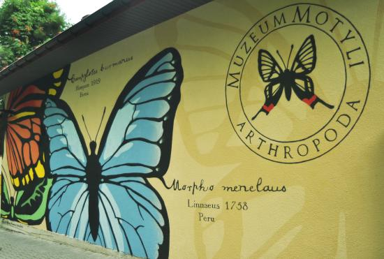 Arthropoda - Butterfly Museum