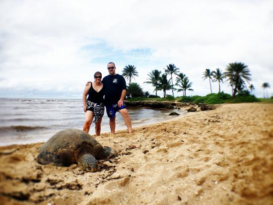 Ohana Island Tours Finding Sea Turtles At Turtle Beach On The North S Of Oahu