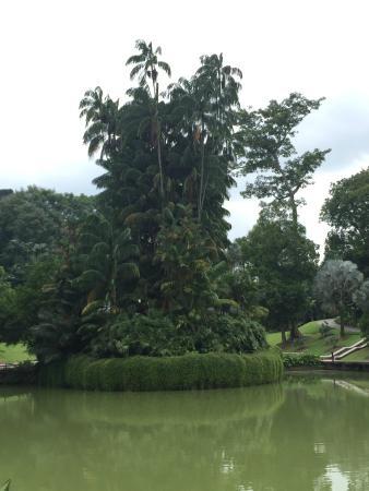 Jardin botanique picture of singapore botanic gardens for Jardin botanique singapour