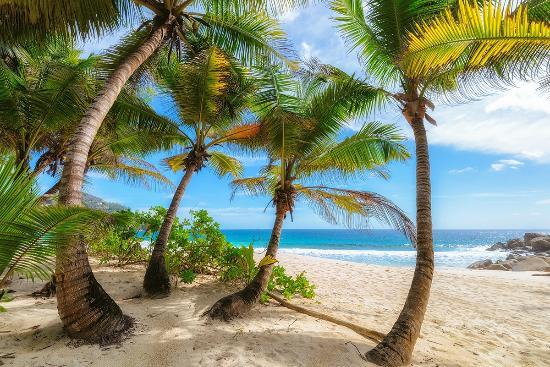 Νήσος Μάχε, Σεϋχέλλες: Palms on Anse Intendance Beach