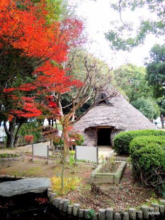 Tano Ruins