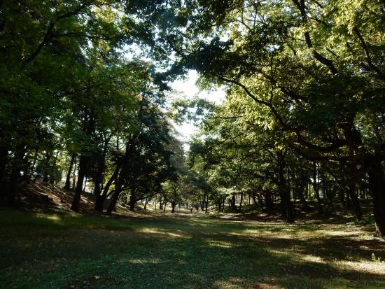 Sayama, اليابان: 公園内の樹木