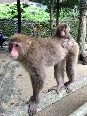 beppu - Picture of Takasakiyama Natural Zoo, Oita - TripAdvisor
