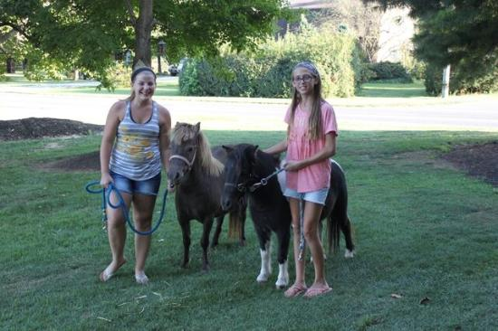 Green Acres Farm Bed and Breakfast: Walk the ponies