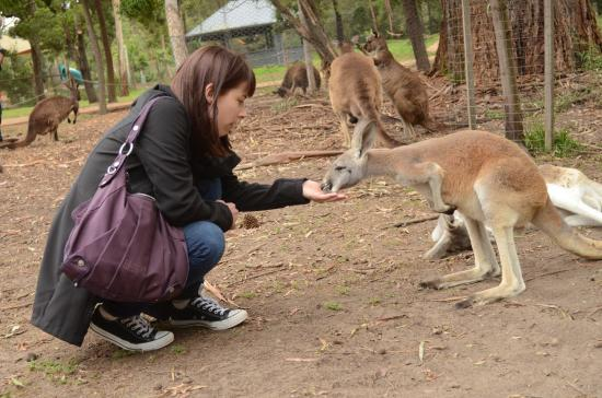Yarra Valley Transfers - Wine Tours: Healesville Animal Sanctuary