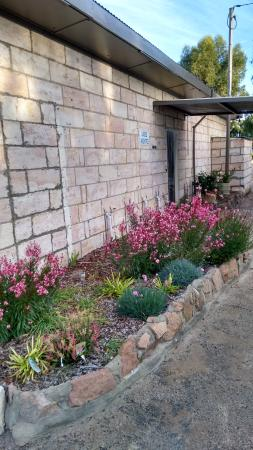 Bathers Paradise Caravan Park: the new flower beds around the amenties