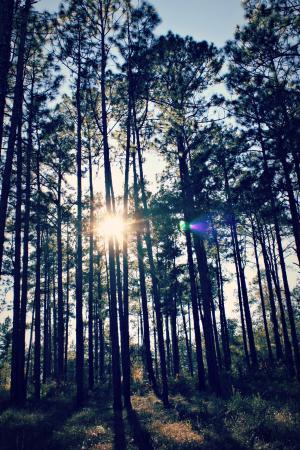 Falling Waters State Park: Sun peeking through ...
